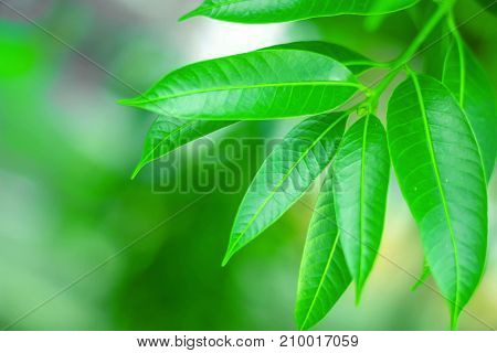 fresh green leaves, on the green background
