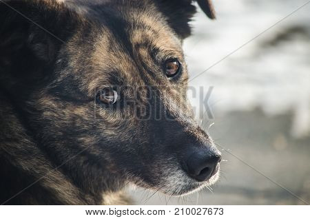 Sad look of a lonely homeless dog