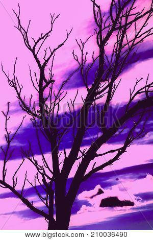 Silhouette of tree branches in authumn and sky background