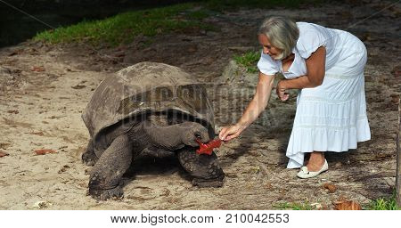 Beautiful senior woman with big turtle outdoors