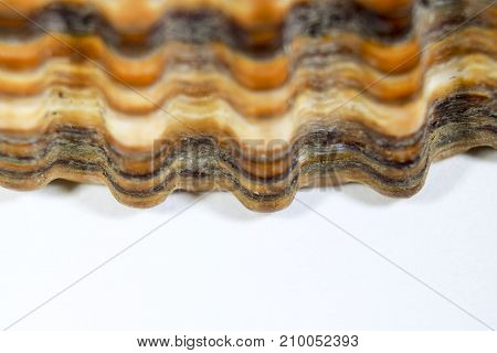 Extreme Closeup Macro Of Brown Scallop Shell