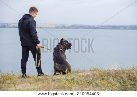 A big dark pitbull walking with owner outdoors. Cute dog standing near the man. River on the background. Full length of man. Copy space. Animal concept.