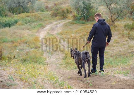 A big dark pitbull walking with owner outdoors. Cute dog standing near the man on the natural background. Full length of man. Animal concept.