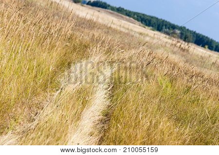 Wheels Traces Through Dry Grass Meadow Going Towards The Forest