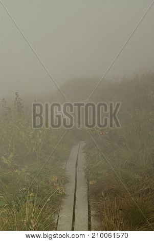 Wooden walkways leading through a dense fog (a descending cloud in a mountainous area) uneven grassy meadow