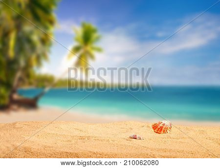 Dream beach in the tropics with shells in the foreground