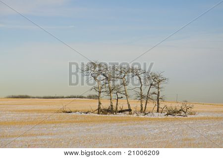 Majestic Lonely Trees