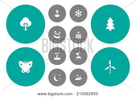 Collection Of Midnight, Green Power, Spruce And Other Elements.  Set Of 12 Natural Icons Set.