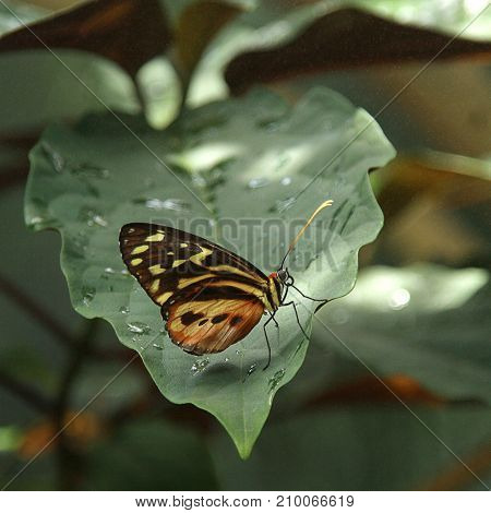 Yellow and Black Butterfly Resting on the Green Leaf