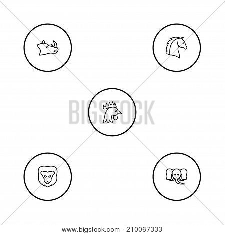 Collection Of Rhino, Elephant, Lion And Other Elements.  Set Of 5 Animal Outline Icons Set.