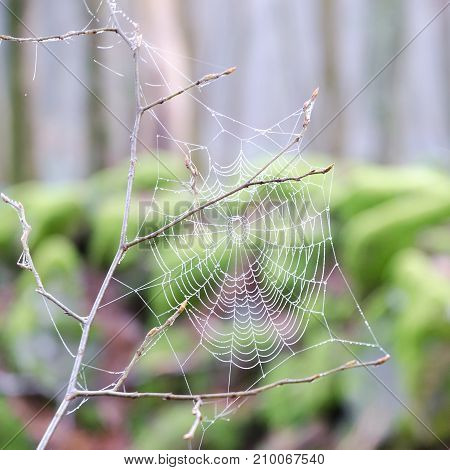 drops of water on a spider's web in a forest