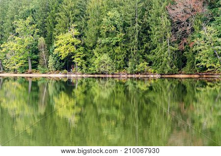 reflection of a pin forest in a lake
