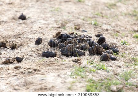 horse poo . In the park in nature