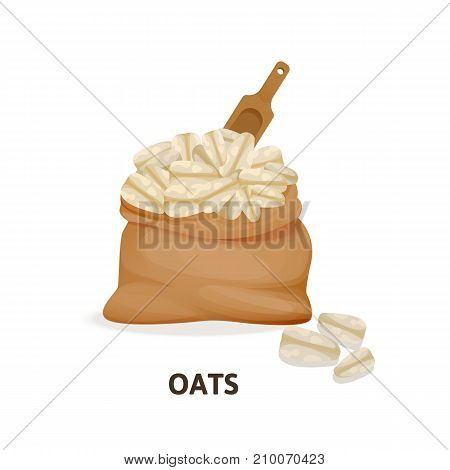 Concept of grain crops in bags. Bag of oats culture and wooden spoon, herbaceous plant, an agricultural crop, useful natural organic food, dishes, ingredient for oatmeal. Vector illustration.