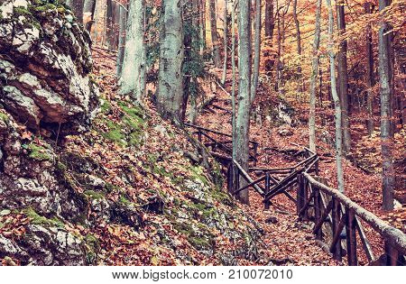 Hiking path with railing in the autumn deciduous forest. Seasonal natural scene. Tourism theme. Vibrant colors. Red photo filter.