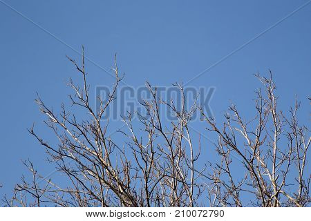 bare tree branches against the sky . In the park in nature