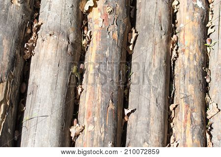 wooden background . In the park in nature