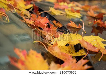 Many leaves on a car in autumn