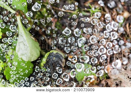 Close Up Of Big Dew Water Drops On A Spider Web Near Ground In The Garden