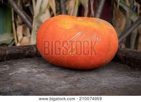 Pumpkin used for special decoration on wood