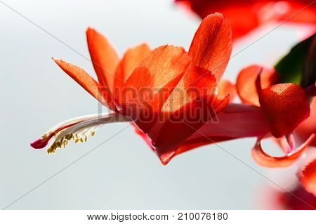 Closeup Of Beautiful Red Flowers With Blur Background