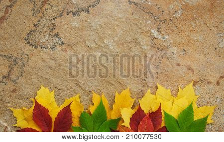 Autumn Leaves On Stone Background