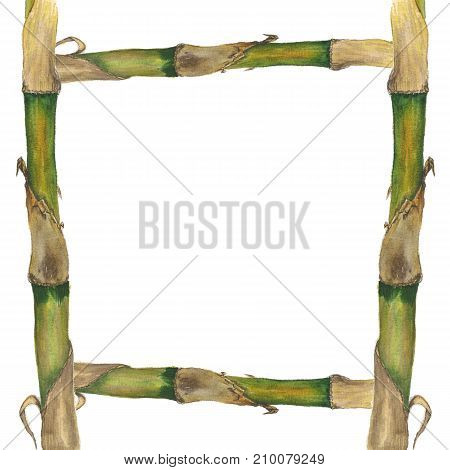 Watercolor bamboo frame isolated on white background. Hand painting on paper