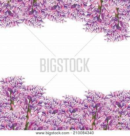 Greeting card. Botanical watercolor illustration of hyacinthus on white background. Could be used as decoration for web design polygraphy or textile flower