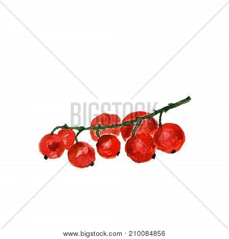 Botanical watercolor illustration sketch of apple on white background. Could be used as decoration for web design cosmetics design package textile