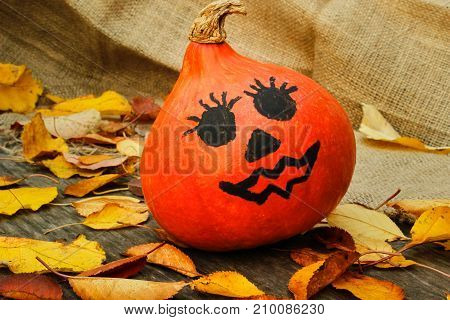 Halloween. a cheerful Halloween pumpkin among the leaves. Side view