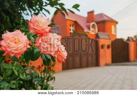 Red Roses In Front Of House
