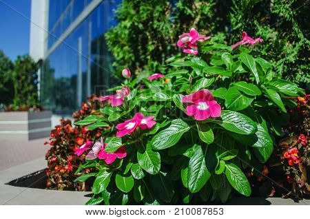 Beautiful Flowers In Front Of An Office Building