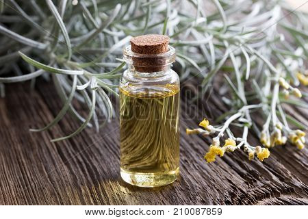 A Bottle Of Helichrysum Essential Oil With Blooming Helichrysum Plant