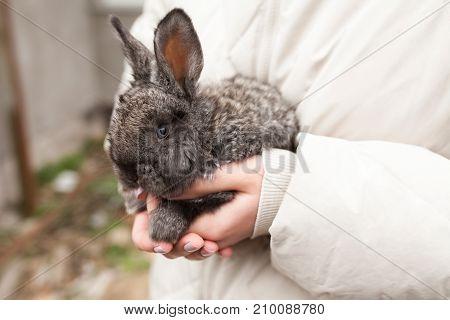 Rabbit On Hands In Farm