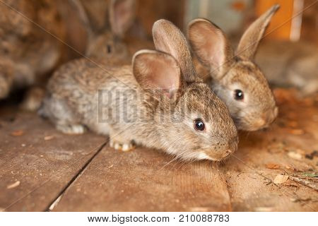 Little brown rabbits in wood box background