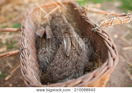 Wood rustic basket with brown rabbits outdoor