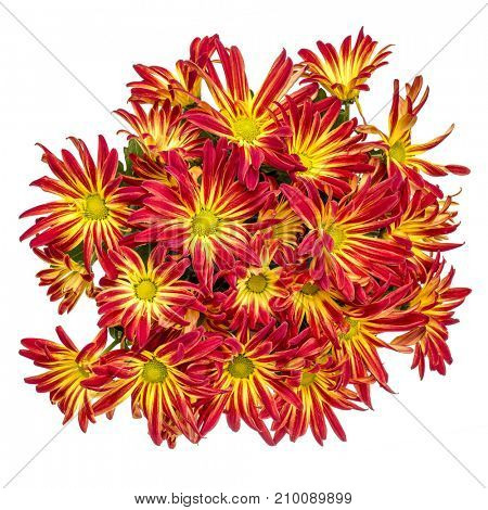bouquet of red and yellow mums isolated on white