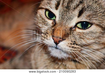 Beautiful Home Cat