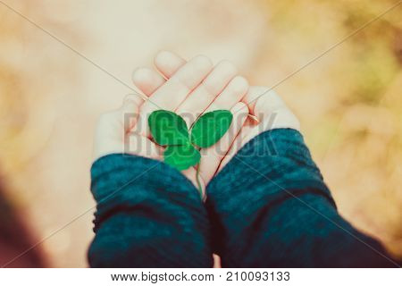 Hand holding green clover leaf sending to another hand. Blur nature background. Rim light. Little warm tone. Focus on clover leaf.