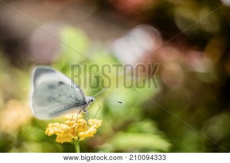 Butterfly on Flower Background with filters applied Vintage Look and Soft Focus