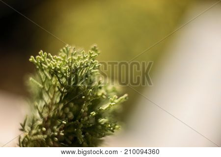 Nature Background with filters applied Vintage Look and Soft Focus