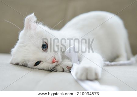 Playful white kitten on sofa