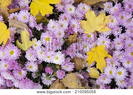 flowers, flowers, flowers, autumn, red and yellow, white and orange, flowers with a blurred background, autumn flower, flowers in a vase, different flowers, with leaves of trees Autumn flowers, autum