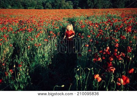 Child In Field With Poppies. Childhood In Nature, Health And Beauty. Children's Walk On The Field. C