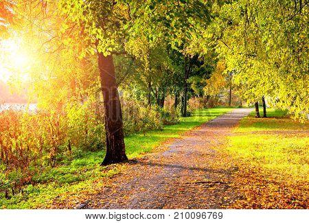 Autumn landscape. Autumn trees along the autumn park alley in sunny weather. Golden autumn trees in the autumn park - autumn sunset landscape. Colorful autumn park nature