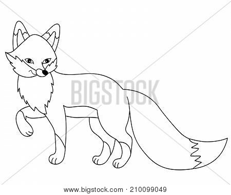 Vector black and white cute cartoon fox. Vector fox. Fox vector illustration