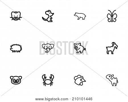 Set Of 12 Editable Zoology Outline Icons. Includes Symbols Such As Predator, Porcupine, Proboscis And More