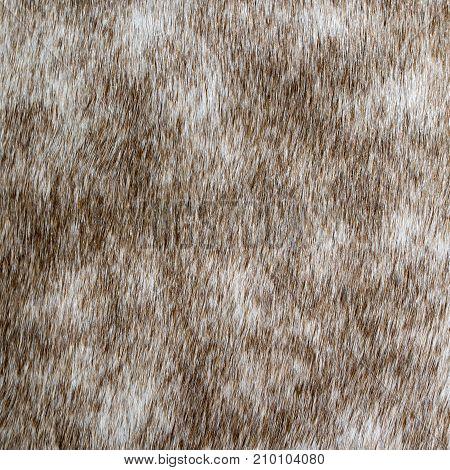close-up photo of natural dappled-grey horse skin texture.