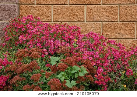 Brown brick fence and red small flowers
