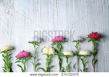 Chrysanthemum flowers beautifully arranged on wooden table